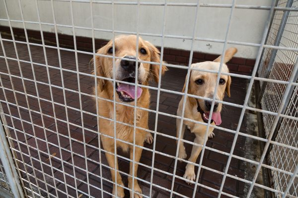 Phillip and Leon, two dogs up for adoption at K9 friends in Dubai