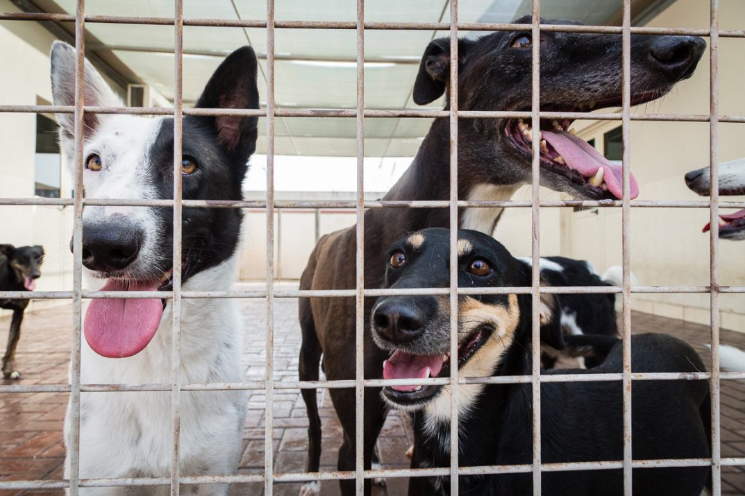 Dogs at the K9 Friends animal shelter in Dubai